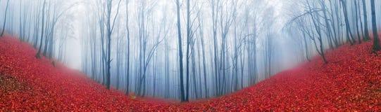 Δάσος οξιών το φθινόπωρο Στοκ φωτογραφία με δικαίωμα ελεύθερης χρήσης