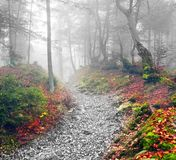 Δάσος οξιών το φθινόπωρο Στοκ Φωτογραφίες