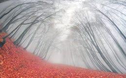 Δάσος οξιών το φθινόπωρο Στοκ εικόνα με δικαίωμα ελεύθερης χρήσης