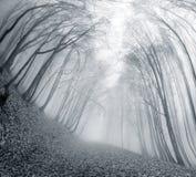 Δάσος οξιών το φθινόπωρο Στοκ εικόνες με δικαίωμα ελεύθερης χρήσης