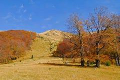 δάσος οξιών φθινοπώρου στοκ φωτογραφία με δικαίωμα ελεύθερης χρήσης