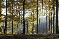 Δάσος οξιών φθινοπώρου Στοκ φωτογραφίες με δικαίωμα ελεύθερης χρήσης
