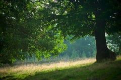 δάσος οξιών Στοκ φωτογραφίες με δικαίωμα ελεύθερης χρήσης