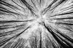 Δάσος οξιών Στοκ φωτογραφία με δικαίωμα ελεύθερης χρήσης