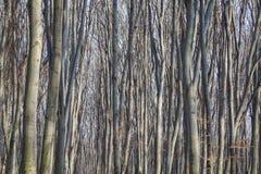 Δάσος οξιών Στοκ Φωτογραφίες