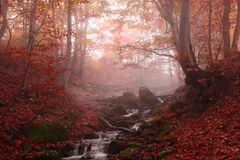 δάσος οξιών misty στοκ φωτογραφία