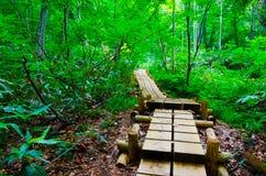 Δάσος οξιών, Shirakami Sanchi, Ιαπωνία. Στοκ Εικόνες