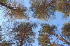 δάσος ουρανού Στοκ εικόνα με δικαίωμα ελεύθερης χρήσης