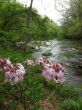 Δάσος λουλουδιών Στοκ Εικόνες