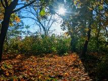 Δάσος ο ήλιος Στοκ εικόνες με δικαίωμα ελεύθερης χρήσης