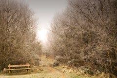 δάσος πάγκων απομονωμένο Στοκ Φωτογραφία