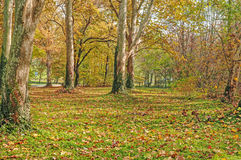 Δάσος πάρκων πόλεων, δέντρα με τον κισσό Στοκ εικόνα με δικαίωμα ελεύθερης χρήσης