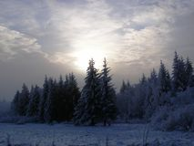 δάσος πέρα από το ηλιοβασί&l Στοκ Φωτογραφίες
