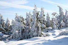 δάσος παγωμένο Στοκ Φωτογραφία