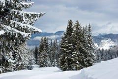 δάσος παγωμένο στοκ φωτογραφία με δικαίωμα ελεύθερης χρήσης