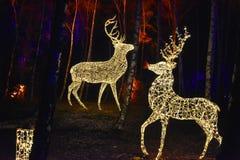 Δάσος παραμυθιού με τα φωτισμένα ζώα στοκ φωτογραφία