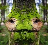δάσος παραμυθιού προσώπ&omicro Στοκ Φωτογραφία