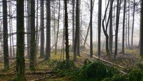 Δάσος παραμυθιού στοκ φωτογραφία με δικαίωμα ελεύθερης χρήσης