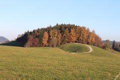 δάσος παραμυθιού Στοκ εικόνα με δικαίωμα ελεύθερης χρήσης