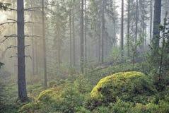 Δάσος παραμυθιού Στοκ Φωτογραφία