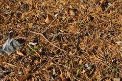 δάσος πατωμάτων Στοκ φωτογραφίες με δικαίωμα ελεύθερης χρήσης