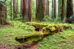 Δάσος παλαιός-αλσών στοκ εικόνα με δικαίωμα ελεύθερης χρήσης