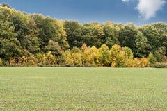 δάσος πεδίων πλησίον Στοκ εικόνα με δικαίωμα ελεύθερης χρήσης