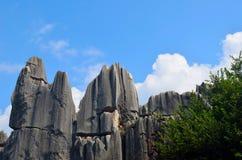 Δάσος πετρών Στοκ Φωτογραφίες