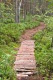δάσος πεύκων μονοπατιών Στοκ Φωτογραφία