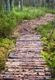 δάσος πεύκων μονοπατιών Στοκ εικόνα με δικαίωμα ελεύθερης χρήσης
