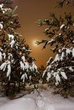 Δάσος πεύκων νύχτας Στοκ εικόνα με δικαίωμα ελεύθερης χρήσης
