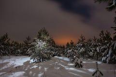 Δάσος πεύκων νύχτας Στοκ φωτογραφία με δικαίωμα ελεύθερης χρήσης