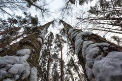 Δάσος πεύκων στα προάστια της Μόσχας όμορφοι φιλικοί κορίτσι και τύπος από κοινού Στοκ εικόνες με δικαίωμα ελεύθερης χρήσης