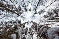 Δάσος πεύκων στα προάστια της Μόσχας όμορφοι φιλικοί κορίτσι και τύπος από κοινού Στοκ φωτογραφία με δικαίωμα ελεύθερης χρήσης