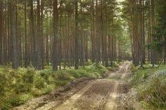 Δάσος πεύκων στην ημέρα Στοκ φωτογραφία με δικαίωμα ελεύθερης χρήσης