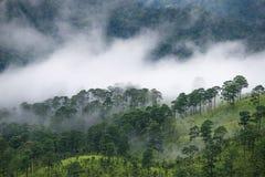 Δάσος πεύκων στο βουνό μετά από να βρέξει με την ομίχλη Στοκ Φωτογραφίες