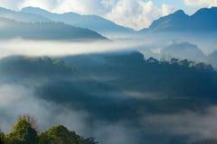 Δάσος πεύκων στο βουνό μετά από να βρέξει με την ομίχλη ANG Khang Chiang Mai Doi Στοκ εικόνα με δικαίωμα ελεύθερης χρήσης