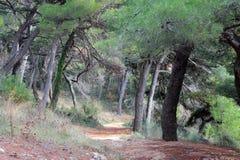 Δάσος πεύκων στο βράχο στην αδριατική ακροθαλασσιά (Μαυροβούνιο, χειμώνας) Στοκ φωτογραφίες με δικαίωμα ελεύθερης χρήσης