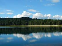 Δάσος πεύκων στο montengro Στοκ Εικόνες