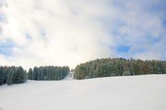 Δάσος πεύκων χιονιού Στοκ Εικόνες