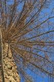 Δάσος πεύκων στοκ φωτογραφία με δικαίωμα ελεύθερης χρήσης