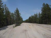 Δάσος 18 πεύκων Στοκ Εικόνες
