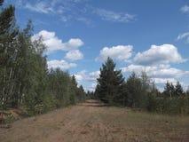 Δάσος 23 πεύκων Στοκ Εικόνες