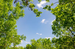 δάσος πλαισίων Στοκ εικόνες με δικαίωμα ελεύθερης χρήσης