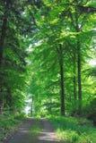 δάσος πλατύφυλλων Στοκ Εικόνες