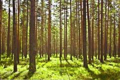 δάσος πλεονεξίας Στοκ φωτογραφία με δικαίωμα ελεύθερης χρήσης