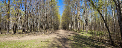 Δάσος πορειών παρόδων διάβασης πεζών την άνοιξη Στοκ Φωτογραφία
