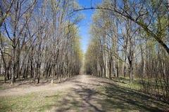 Δάσος πορειών παρόδων διάβασης πεζών την άνοιξη Στοκ φωτογραφία με δικαίωμα ελεύθερης χρήσης