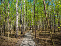 Δάσος πορειών την άνοιξη Στοκ Εικόνες