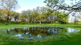 Δάσος που απεικονίζεται στη μικρή λίμνη στοκ εικόνα